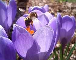Ich lieb` den Frühling
