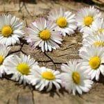 Blütenfeen und Wiesengeister