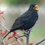 Singt ein Vogel im Märzenwald
