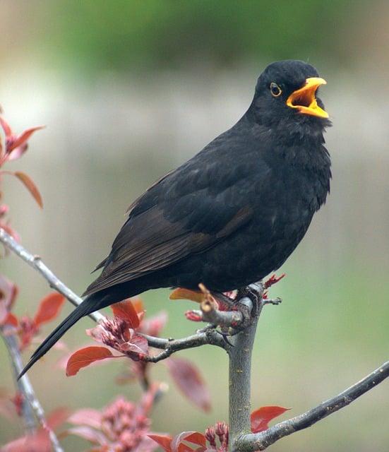 Singt Ein Vogel