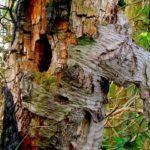 Bunte Wald-Geister