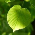 Blätterrollen