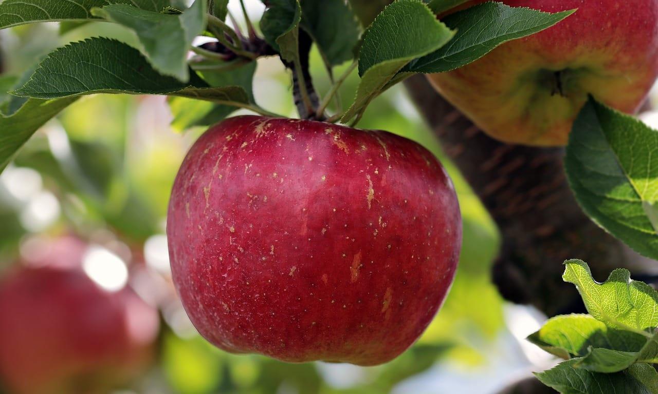 Der Apfel - ein Gedicht zum Recken und Strecken - Kindergarten Ideen